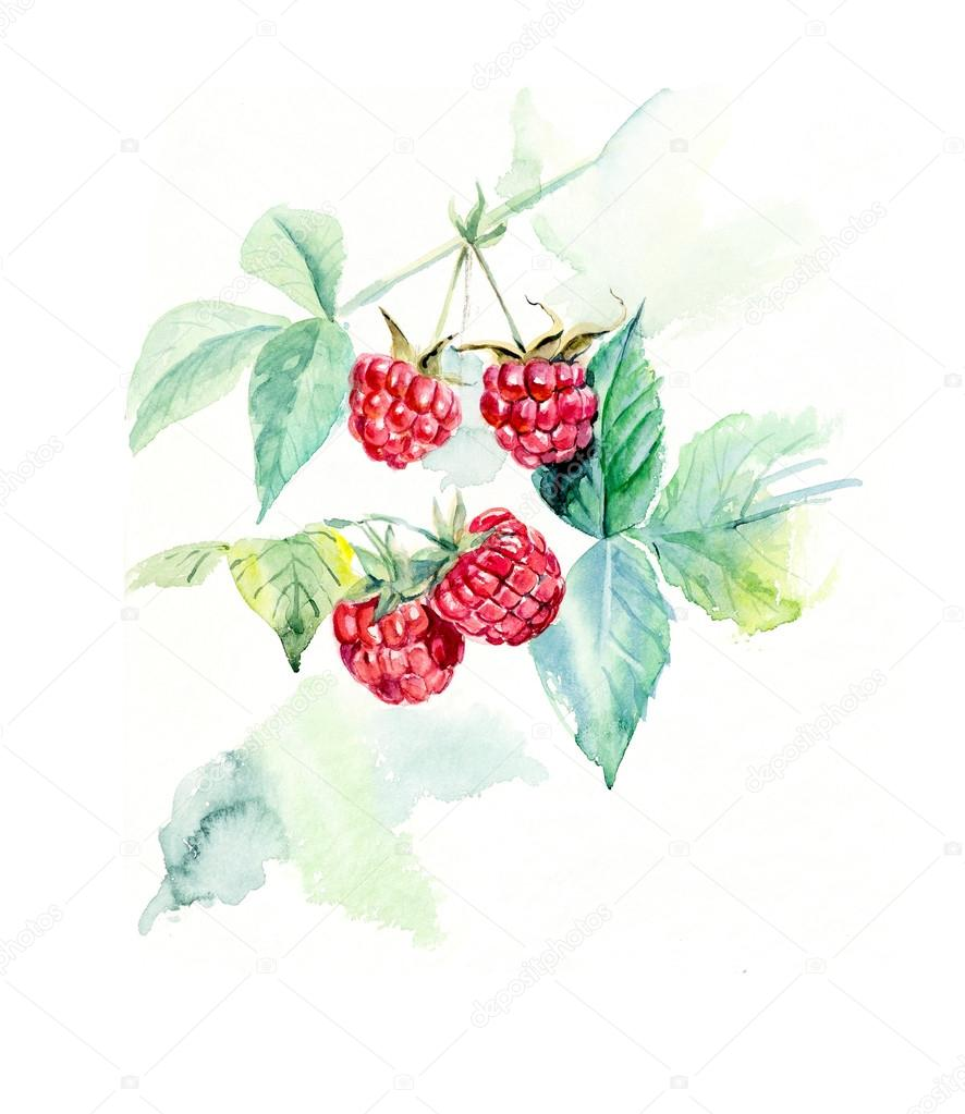 Branch raspberry.