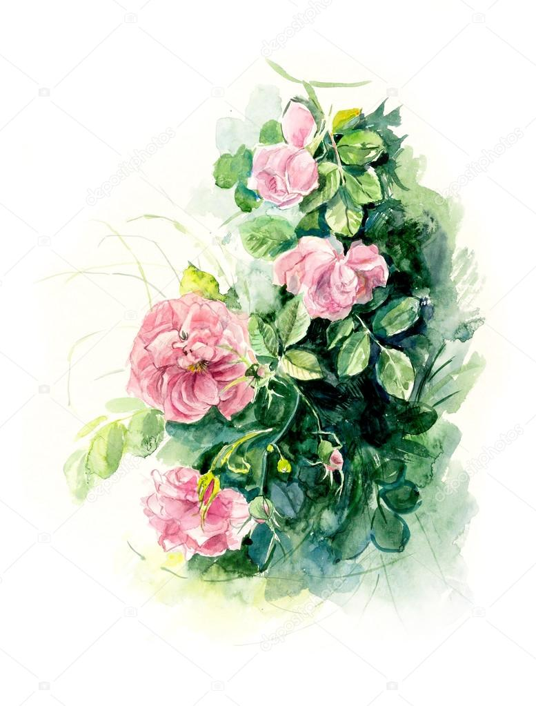 Rosebush pattern from pink rose stock photo budogosh 80184480 watercolor painting greeting cards rose background watercolor composition flower backdrop photo by budogosh kristyandbryce Gallery