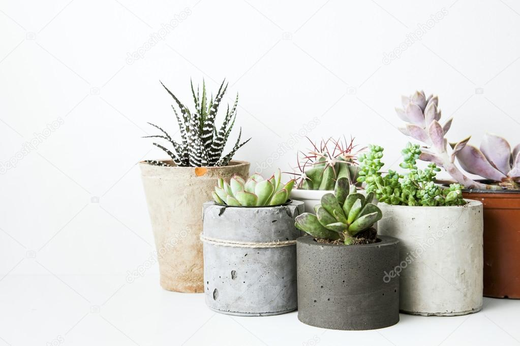 Succulents and cactus in concrete pots. Scandinavian hipster room interior