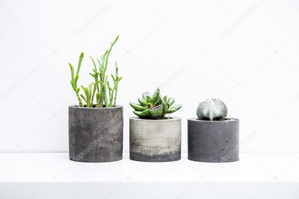 Succulents And Cactus In Concrete Pots Scandinavian