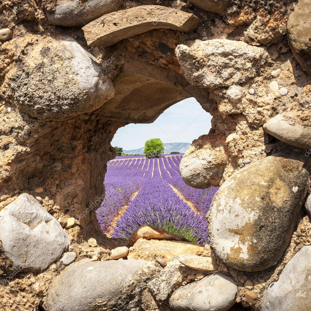 Lavender fields through a cabin window in Valensole