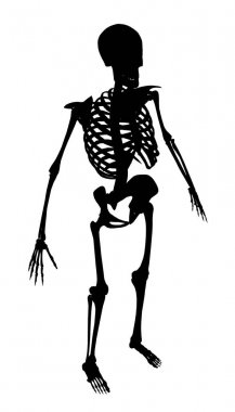 Silhouette of a human skeleton on a white background. Isometric view. Vector illustration