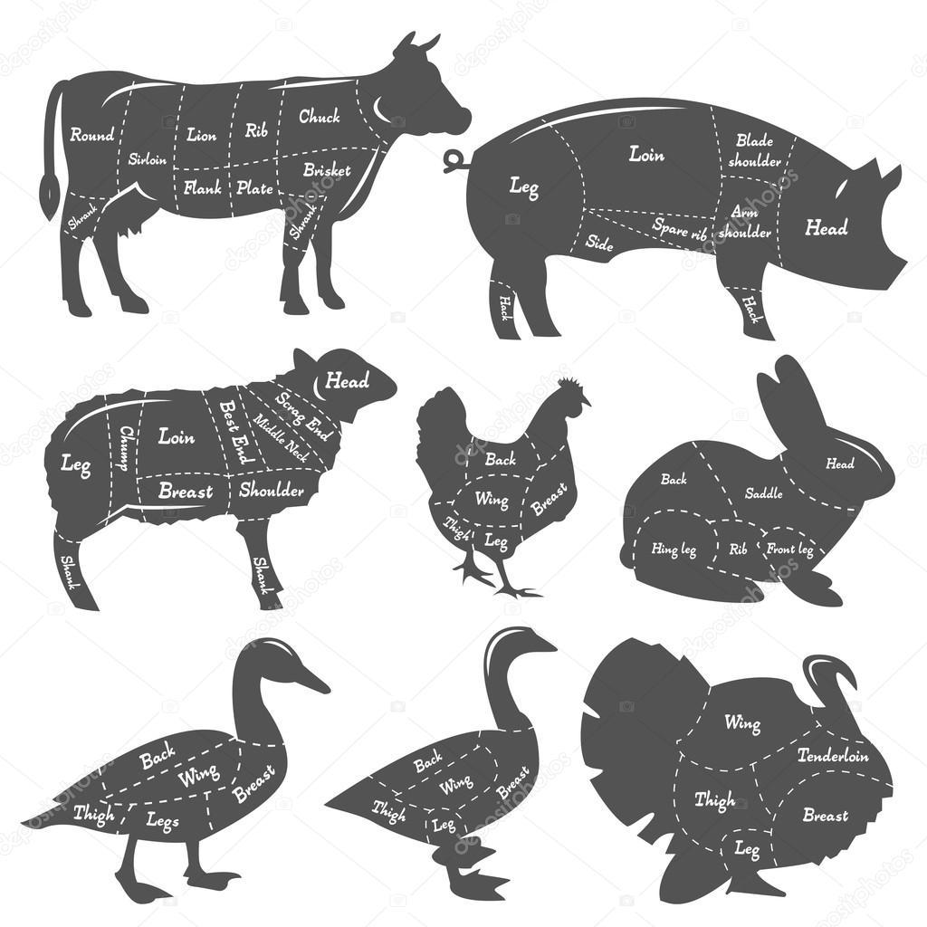 Vintage diagramme de coupe repas d\'animaux domestiques — Image ...