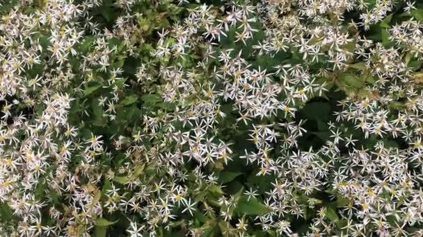 Podzimní květiny na zahradě. Podzimní kvetoucí příroda