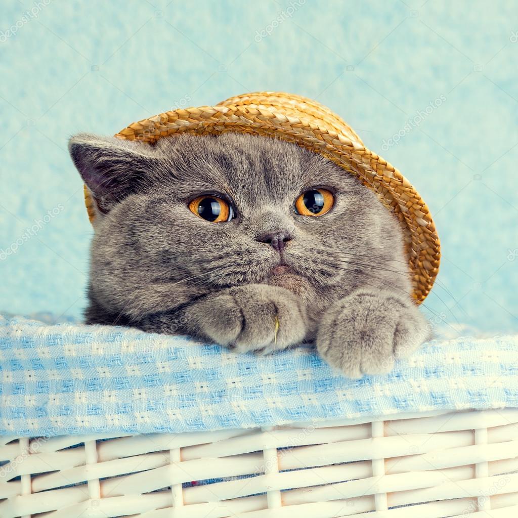 Кошка в соломенной шляпе — Стоковое фото © vvvita #113402024