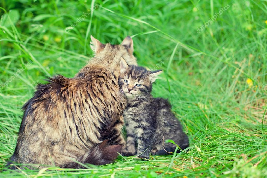 Mom cat with little kitten