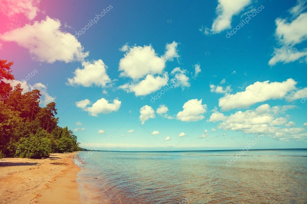 Pine forest on the seashore