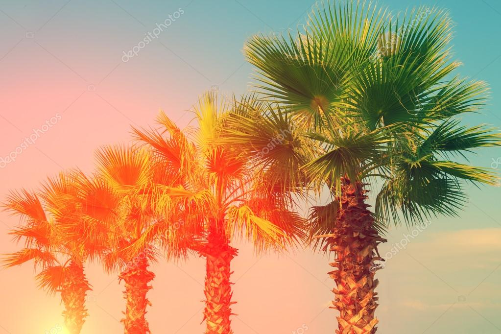 Row of tropic palm trees