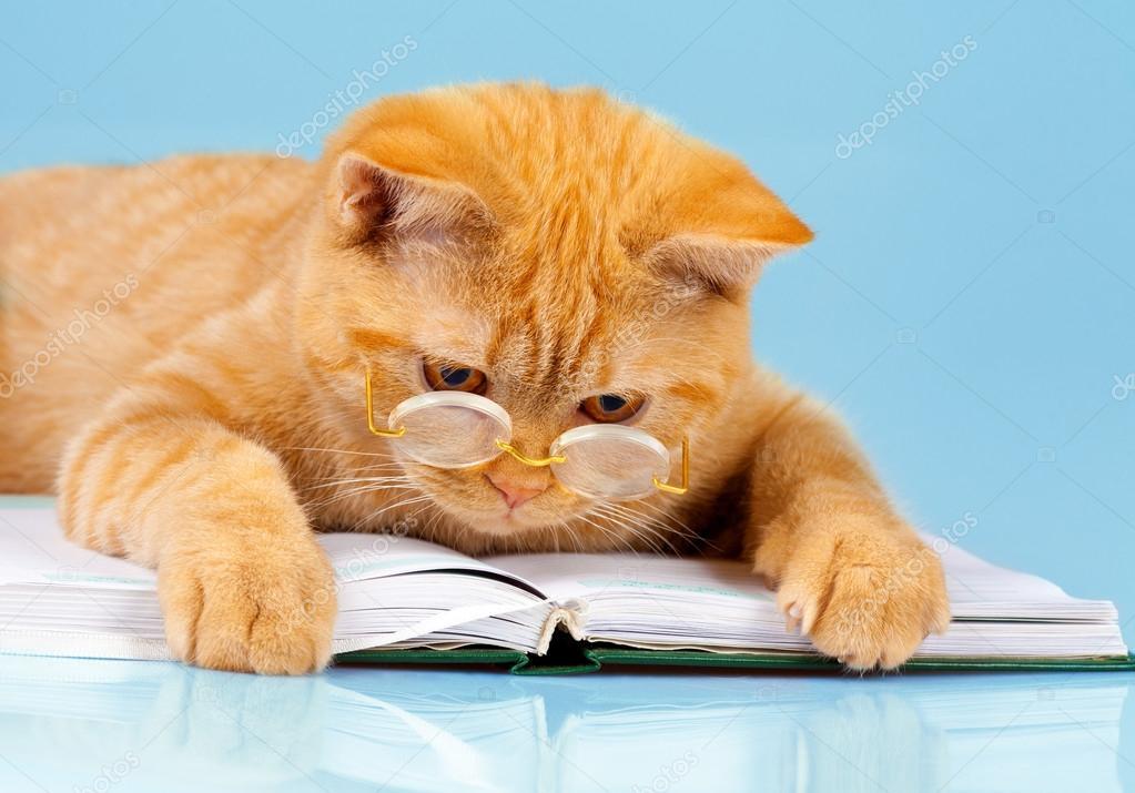 котенок книги мордочка бесплатно