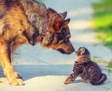 Dog and little kitten