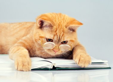 Cat wearing glasses reading book