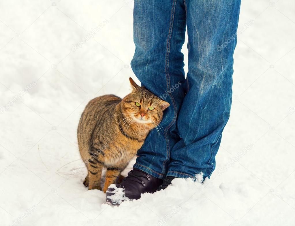 Vivir la vida. Depositphotos_64567997-stock-photo-cat-rubbing-against-male-legs