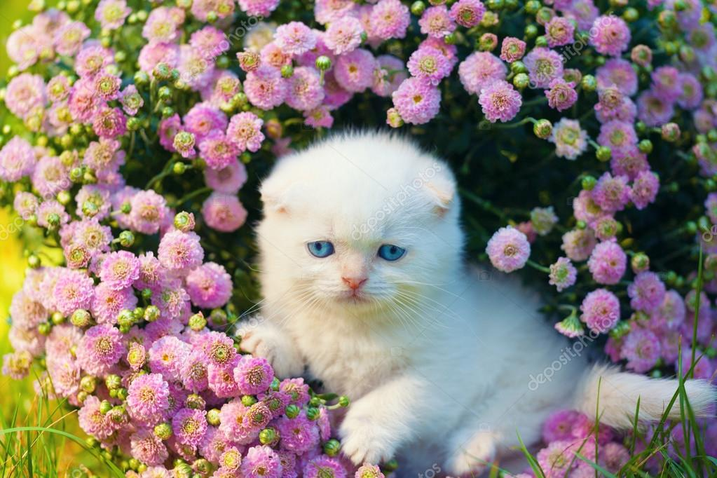 картинки котенок с цветами
