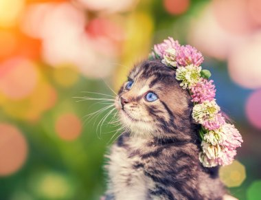 Kitten with clover wreath