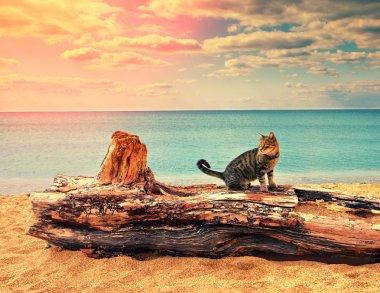 Cat on wooden log