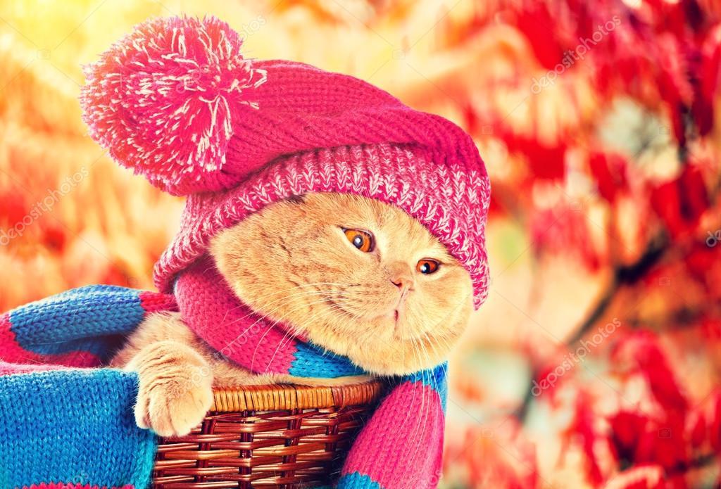 Картинки похолодало одевайся теплее
