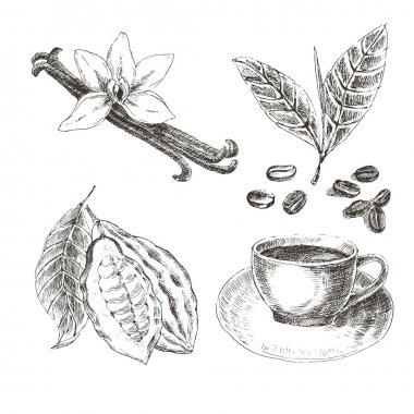 Vector hand drawn set with dessert spices. Vintage illustration. Retro collection of vanilla, cocoa, coffee beans, leaves, hot drink