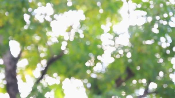 twinkler bokeh under a tree, blurred