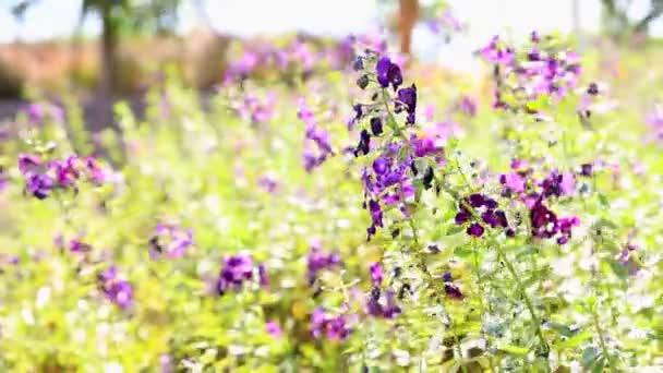 fialové květy se zelenými listy