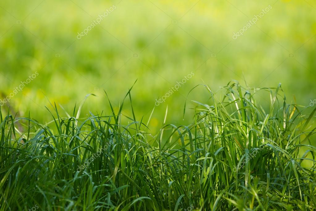 Natural Grass Backgrounds With Beauty Bokeh Stock Photo C Nimnull 71968271