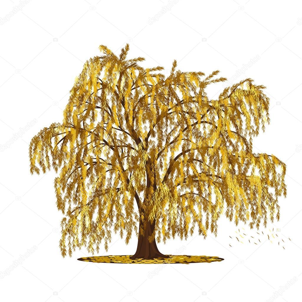 Quinta sauce árbol con hojas amarillas — Vector de stock © M ...