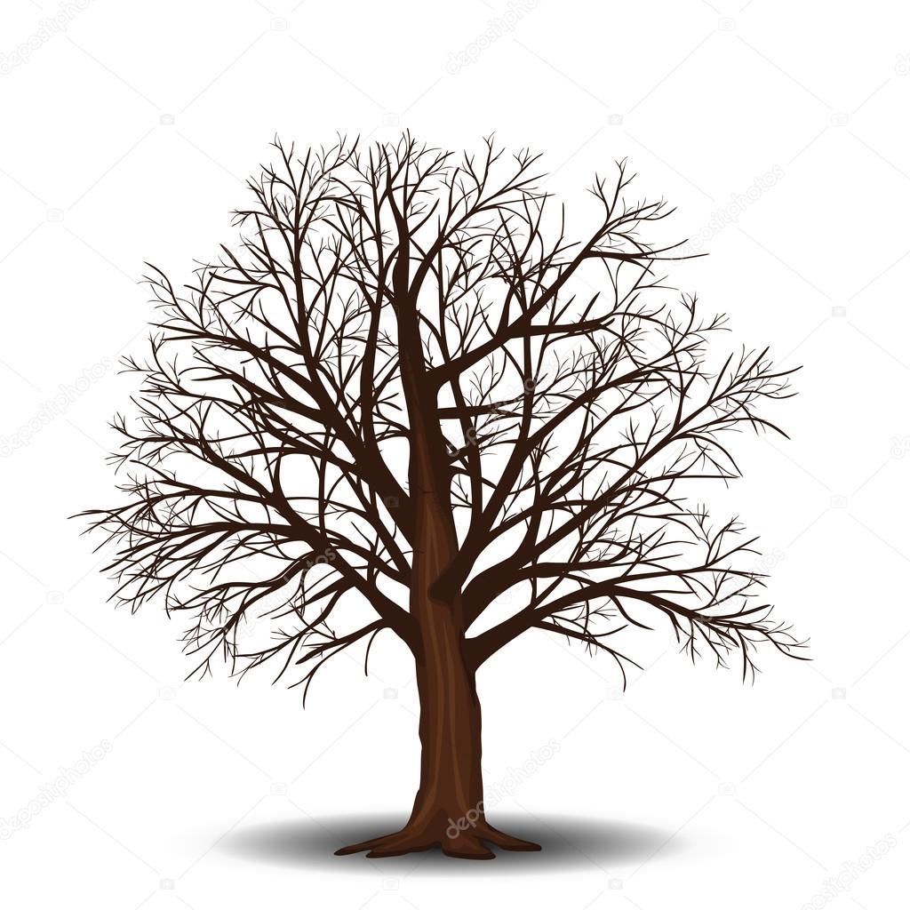 Im genes un arbol sin hojas arce de separado del rbol - Arbres sans feuilles ...