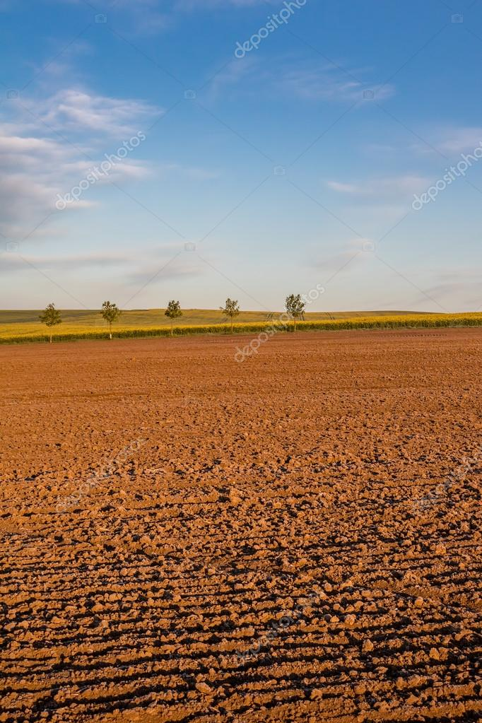 Фотообои Spring landscape with plowed field and blue sky