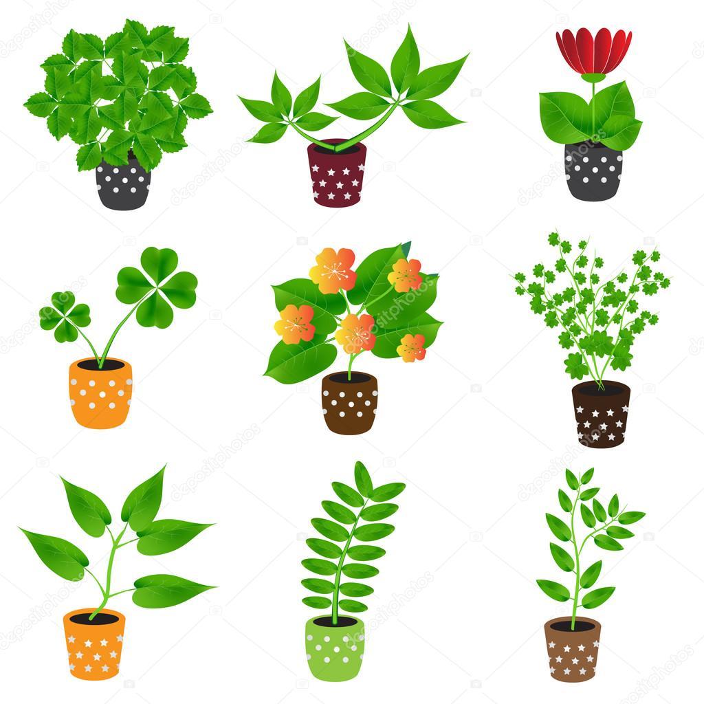 Домашние растения и цветы в цветочных горшках — Векторное ...