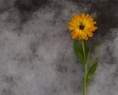 Condolence card with yellow flower