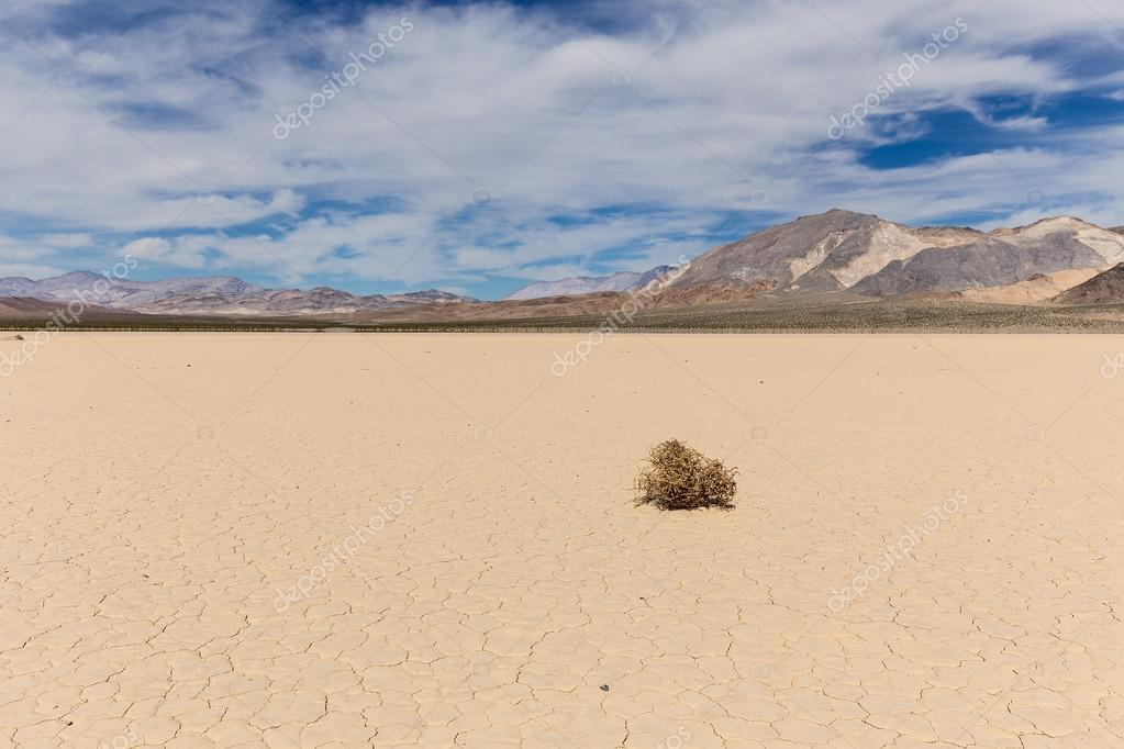 Tumbleweed on dry lake bed in desert