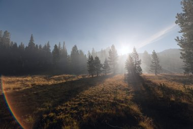 With sun beams passing through the fog at mountain forest