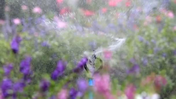 Zblízka postřikovací vodou zalévat, květinová zahrada pozadí, klipu Hd