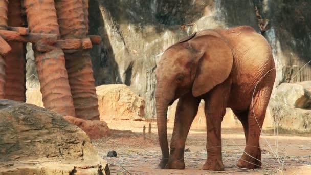 Fiatal afrikai elefánt játék