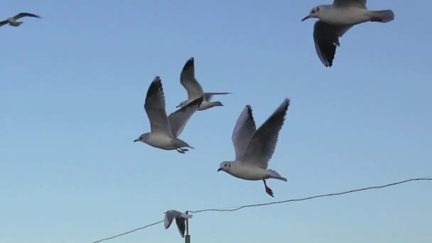 Möwen fliegen in Zeitlupe über Flusswellen, viele strömen