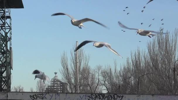 Möwen fliegen in Zeitlupe über die Wellen des Flusses, viele strömen