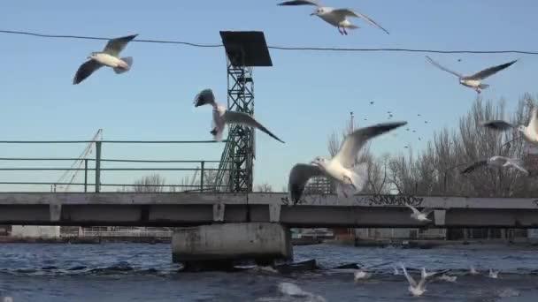 Möwen fliegen über die Wellen des Flusses, viele strömen