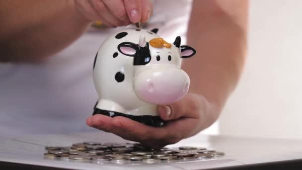Bílý býk z prasečí banky. Vánoce. Nový rok2021. Rok býka. Koncept. Šetřit peníze jako způsob života. Detailní záběr