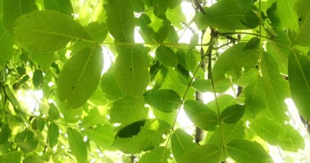 listy stromu 4k