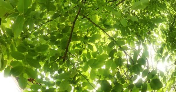 leaves in tree 4k