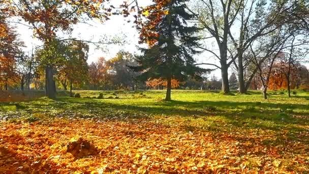 őszi séta az erdőben