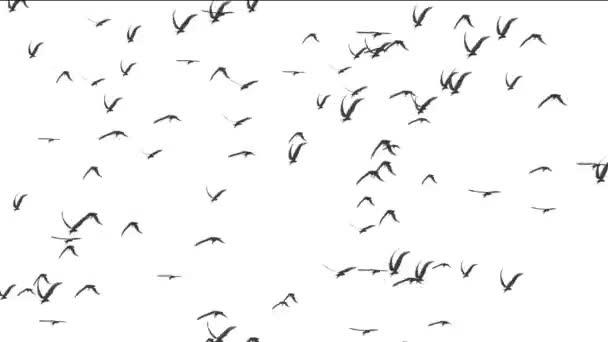 birds white background