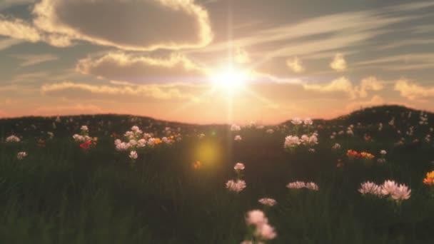 západ slunce v louce s květinami