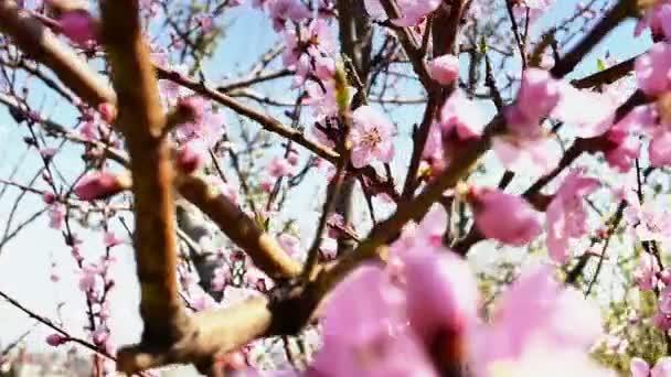 Jarní květiny květu