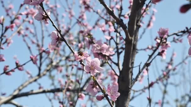 Tavaszi fa virágok virága