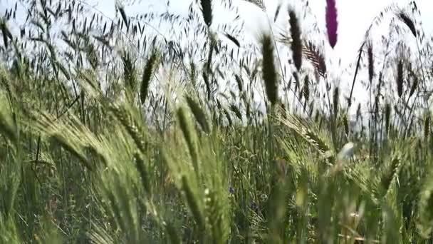 zelené trávě Zpomalený pohyb