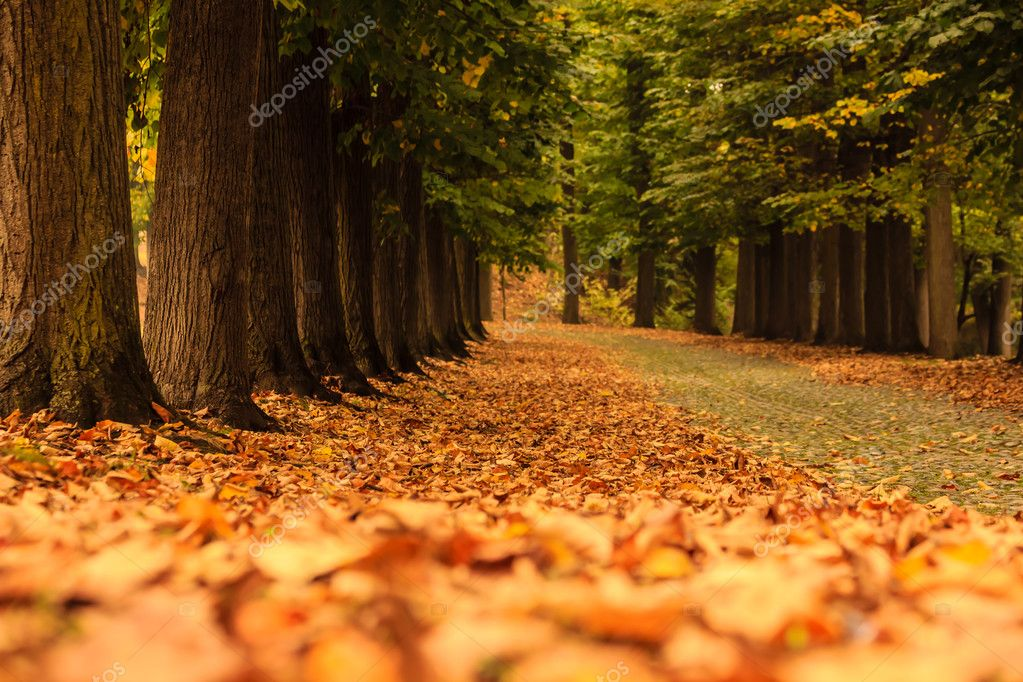 An avenue of trees with a carpet of colourful leaves in autumn