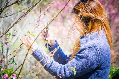 Woman photographed on smartphone Himalayan Cherry. phangoong, ch