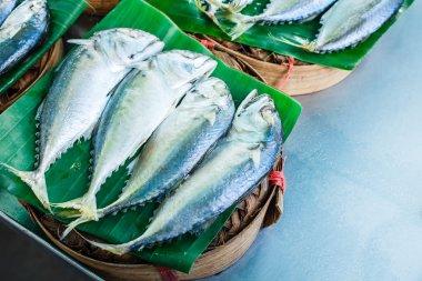 Mackerel or Short-bodied mackerel.