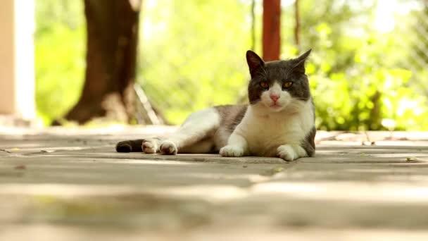 Cat lying on a porche.