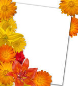 Orange flower background. White paper